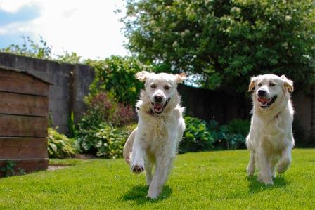 قصههای شهرزاد (14): قصه ی دو سگ!