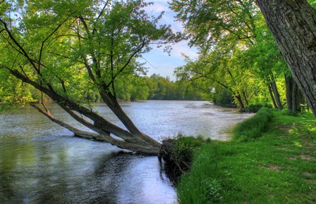 Tree&River