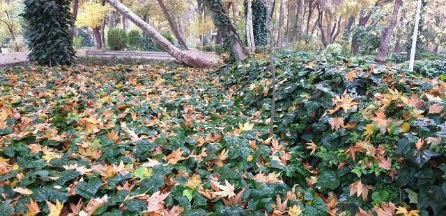 پاییز 98
